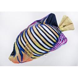 Gaby Pfauenkaiserfisch Kissen, Länge 56 cm